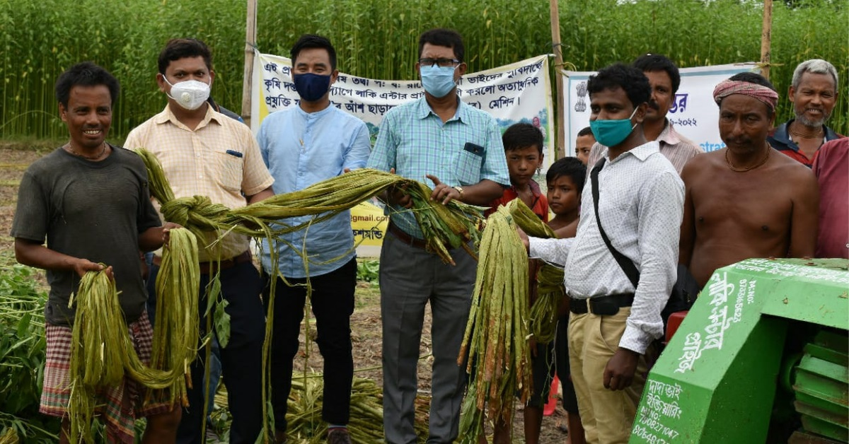 Jute farmers, and their fields of gold